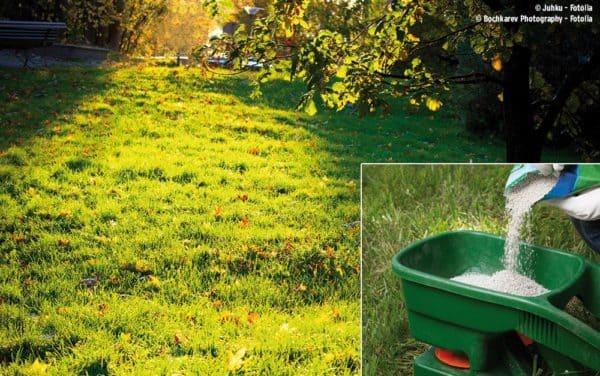 Raiffeisen-Fachmarkt Dinklage informiert über Bedeutung der Herbstrasendüngung